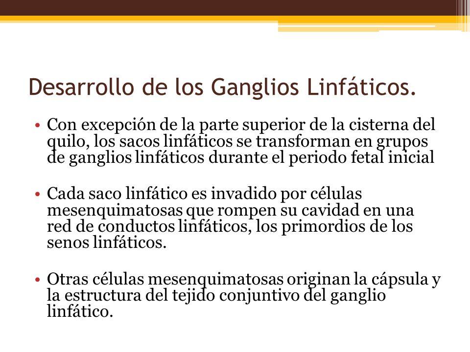 Desarrollo de los Ganglios Linfáticos.