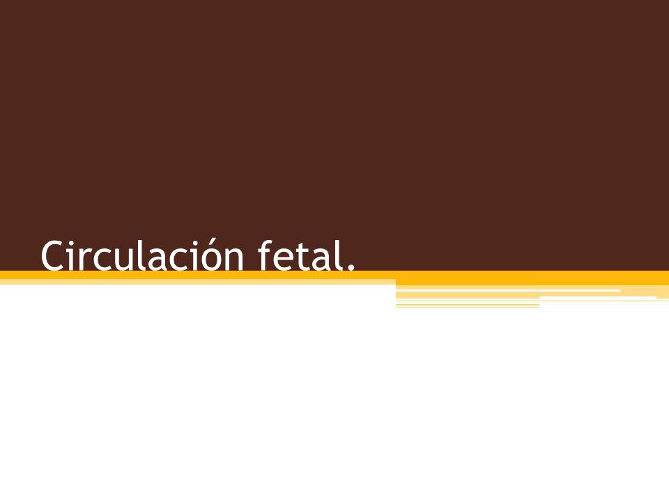 Circulación fetal.