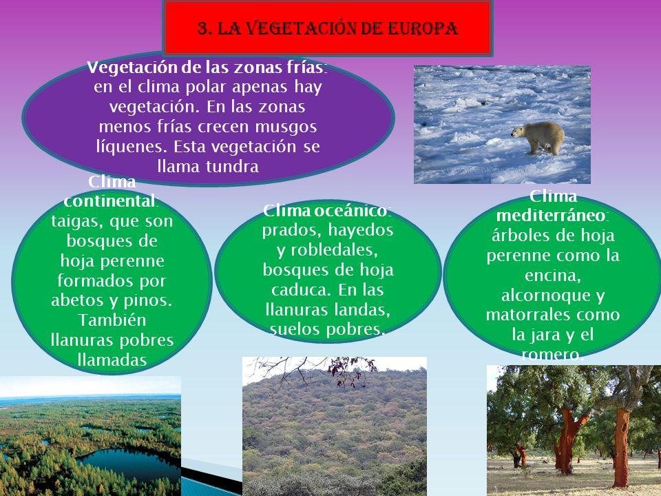 Vegetación de las zonas frías: en el clima polar apenas hay vegetación. En las zonas menos frías crecen musgos líquenes. Esta vegetación se llama tund