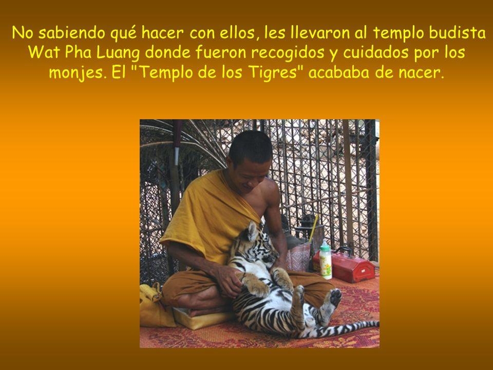 No sabiendo qué hacer con ellos, les llevaron al templo budista Wat Pha Luang donde fueron recogidos y cuidados por los monjes.