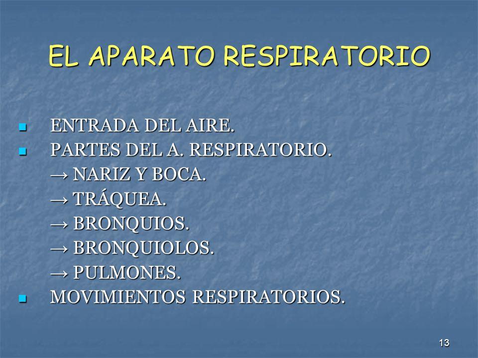 13 EL APARATO RESPIRATORIO ENTRADA DEL AIRE. ENTRADA DEL AIRE. PARTES DEL A. RESPIRATORIO. PARTES DEL A. RESPIRATORIO. NARIZ Y BOCA. NARIZ Y BOCA. TRÁ