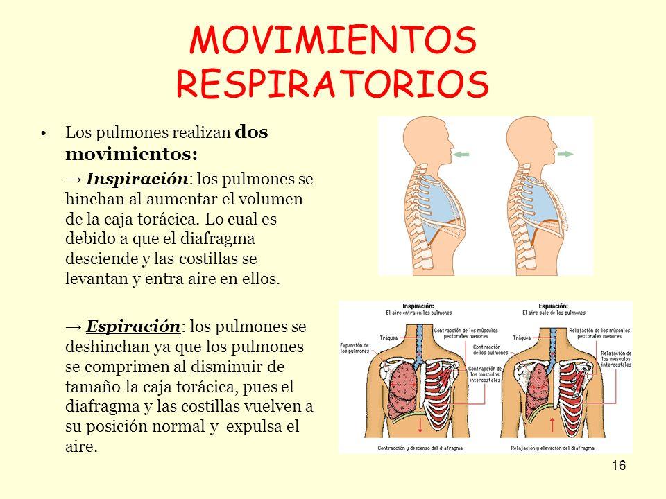 16 MOVIMIENTOS RESPIRATORIOS Los pulmones realizan dos movimientos: Inspiración: los pulmones se hinchan al aumentar el volumen de la caja torácica. L