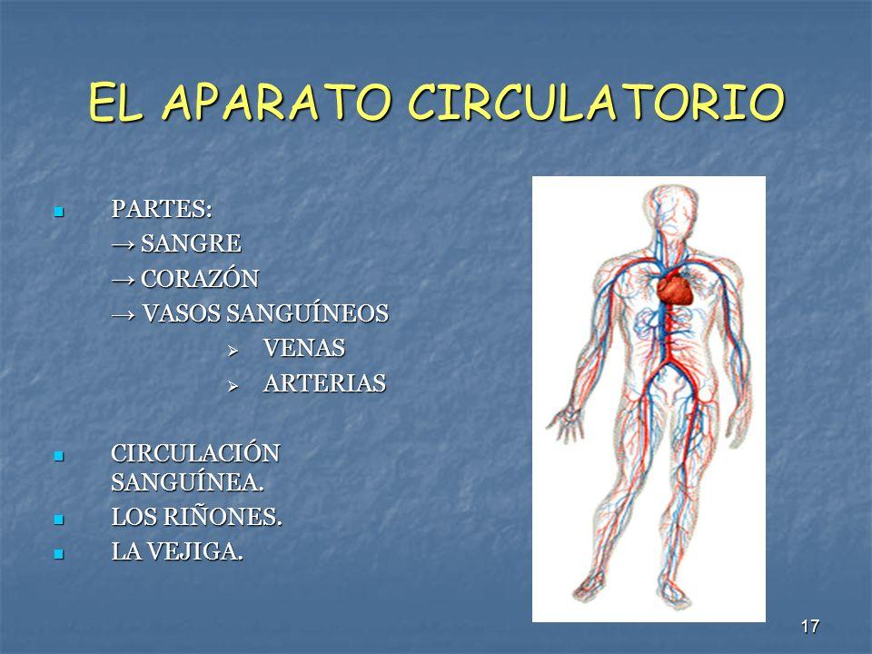 17 EL APARATO CIRCULATORIO PARTES: PARTES: SANGRE SANGRE CORAZÓN CORAZÓN VASOS SANGUÍNEOS VASOS SANGUÍNEOS VENAS VENAS ARTERIAS ARTERIAS CIRCULACIÓN S