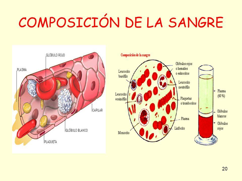 20 COMPOSICIÓN DE LA SANGRE