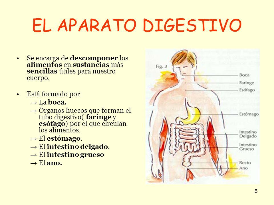 5 EL APARATO DIGESTIVO Se encarga de descomponer los alimentos en sustancias más sencillas útiles para nuestro cuerpo. Está formado por: La boca. Órga