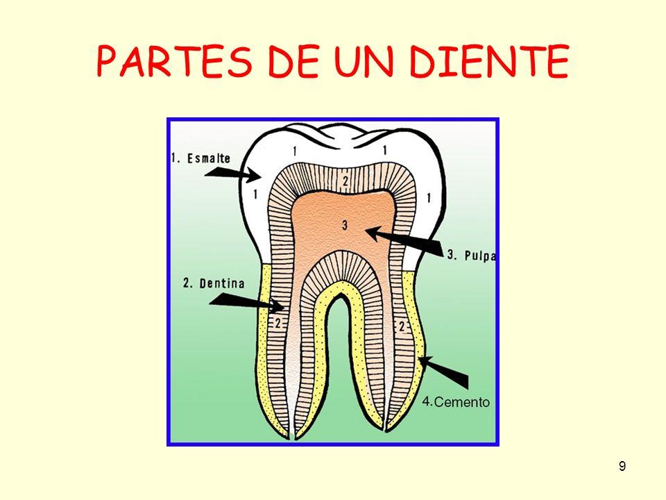 10 SALUD DENTAL La caries dental, es una enfermedad frecuente que ataca y destruye tus dientes por la unión de microbios y dulces que forman ácidos.