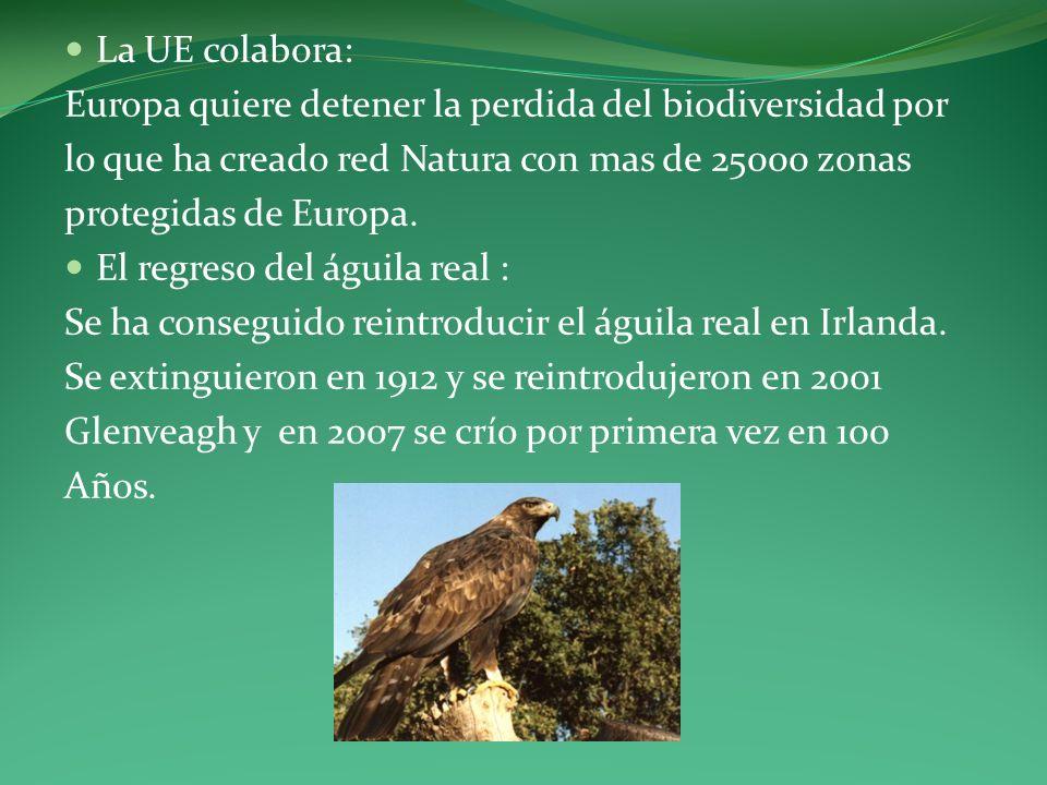 La UE colabora: Europa quiere detener la perdida del biodiversidad por lo que ha creado red Natura con mas de 25000 zonas protegidas de Europa. El reg