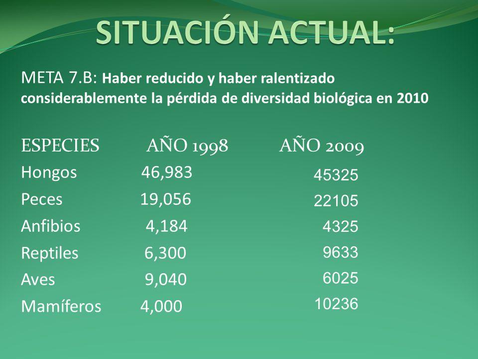 META 7.B: Haber reducido y haber ralentizado considerablemente la pérdida de diversidad biológica en 2010 ESPECIES AÑO 1998 AÑO 2009 Hongos 46,983 Pec