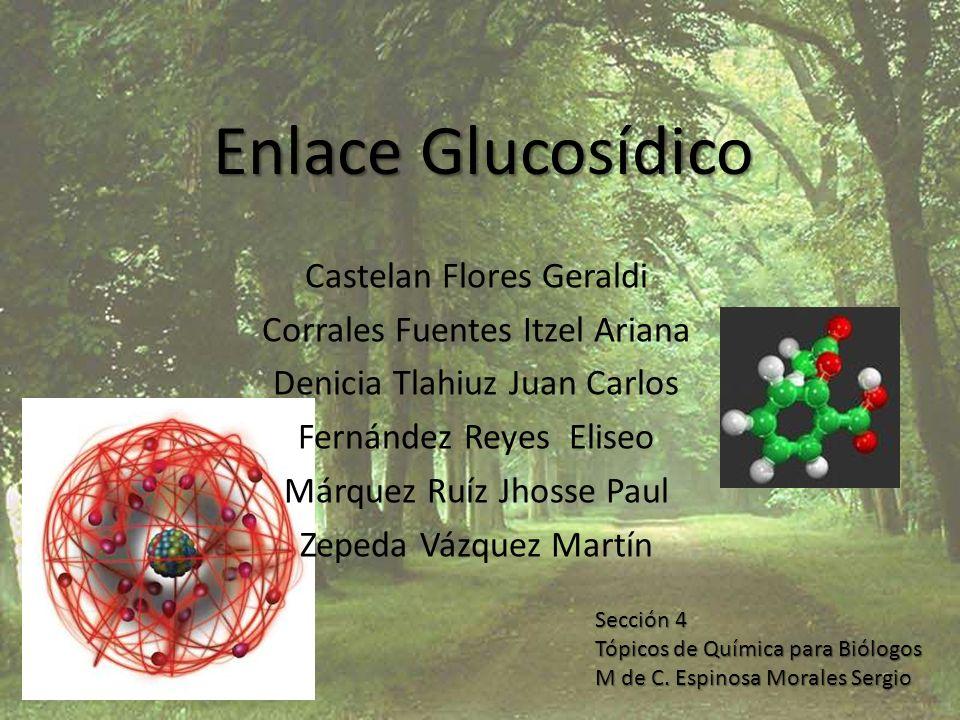 Enlace Glucosídico Existen distintos tipo de enlaces glucosídicos, y depende de que tipo de átomo es el que enlaza las moléculas: – S-glucosídicos: Las enlaza un azufre – N-glucosídicos: Las enlaza un nitrógeno (Nucleótidos) – O-glucosídicos (El mas común): Las enlaza un oxigeno – C-glucosídicos: Los enlaza un carbono