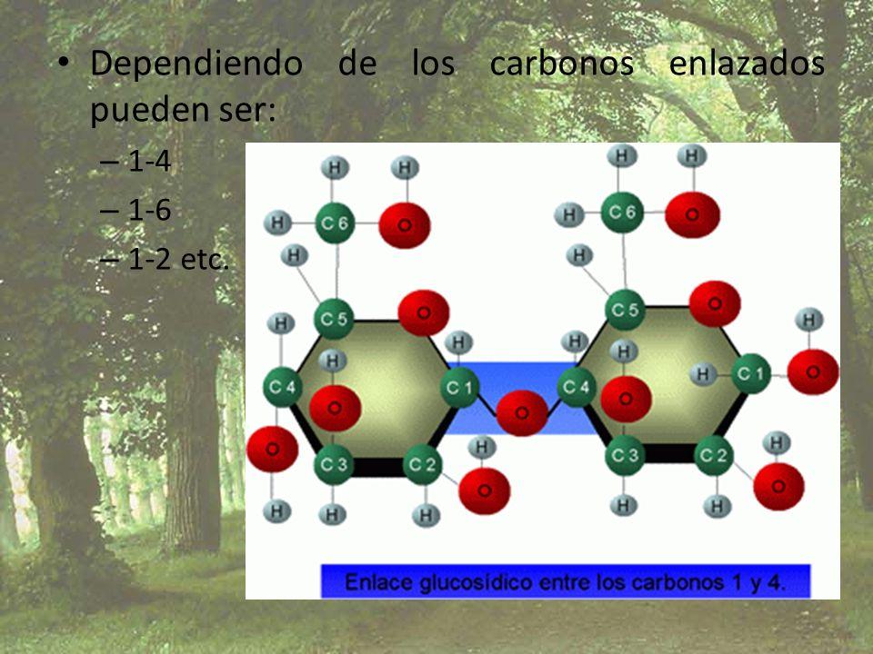 Dependiendo de los carbonos enlazados pueden ser: – 1-4 – 1-6 – 1-2 etc.