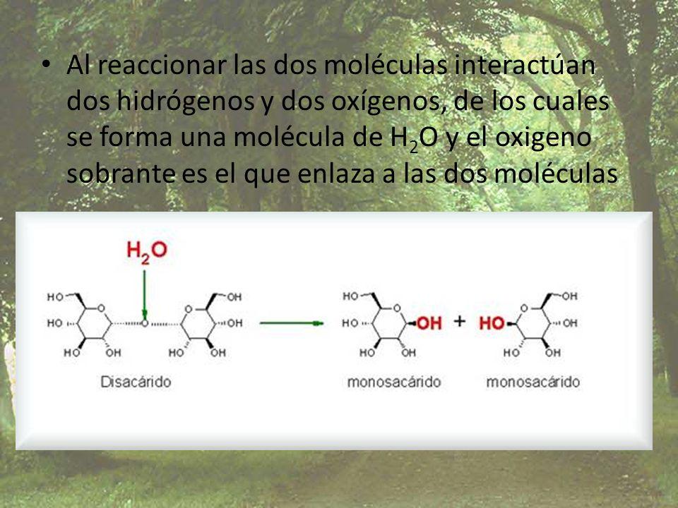 Al reaccionar las dos moléculas interactúan dos hidrógenos y dos oxígenos, de los cuales se forma una molécula de H 2 O y el oxigeno sobrante es el qu