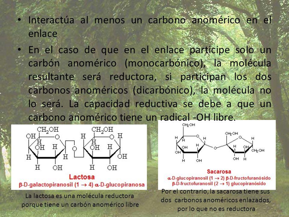 Interactúa al menos un carbono anomérico en el enlace En el caso de que en el enlace participe solo un carbón anomérico (monocarbónico), la molécula r