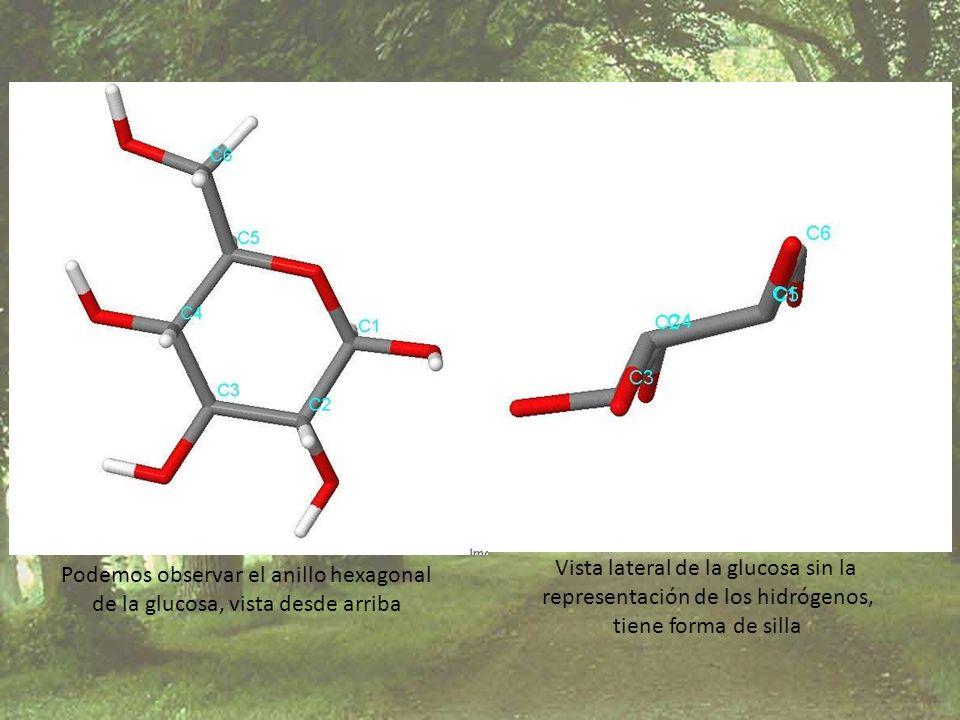 Podemos observar el anillo hexagonal de la glucosa, vista desde arriba Vista lateral de la glucosa sin la representación de los hidrógenos, tiene form