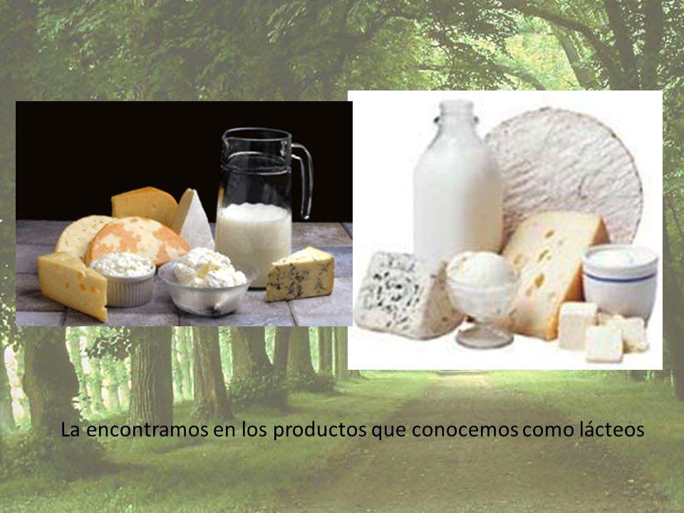 La encontramos en los productos que conocemos como lácteos