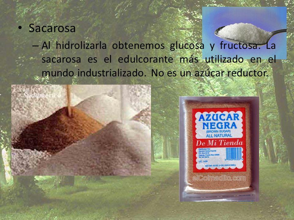 Sacarosa – Al hidrolizarla obtenemos glucosa y fructosa. La sacarosa es el edulcorante más utilizado en el mundo industrializado. No es un azúcar redu