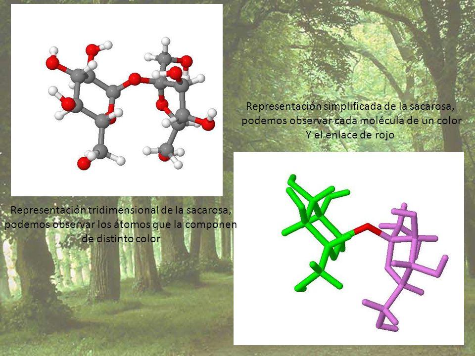 Representación tridimensional de la sacarosa, podemos observar los átomos que la componen de distinto color Representación simplificada de la sacarosa