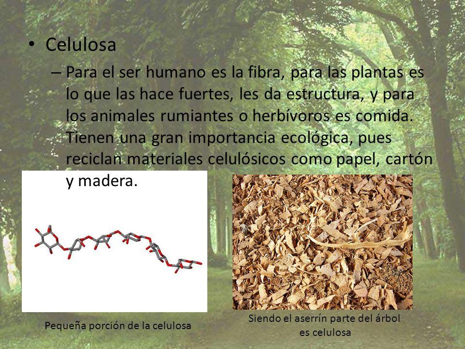 Celulosa – Para el ser humano es la fibra, para las plantas es lo que las hace fuertes, les da estructura, y para los animales rumiantes o herbívoros
