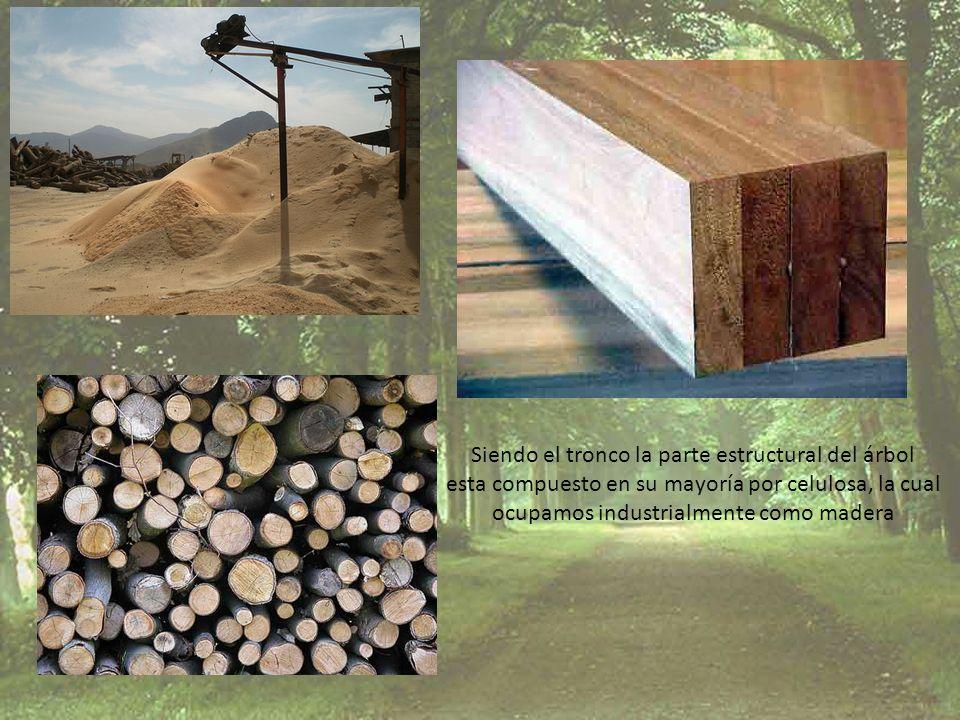 Siendo el tronco la parte estructural del árbol esta compuesto en su mayoría por celulosa, la cual ocupamos industrialmente como madera