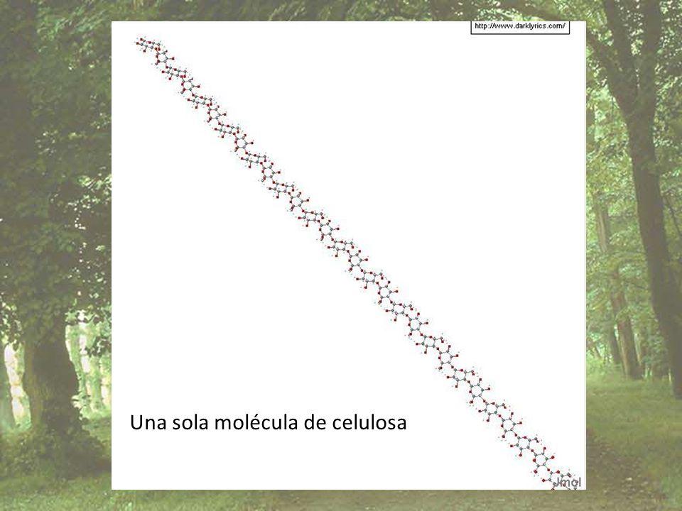 Una sola molécula de celulosa