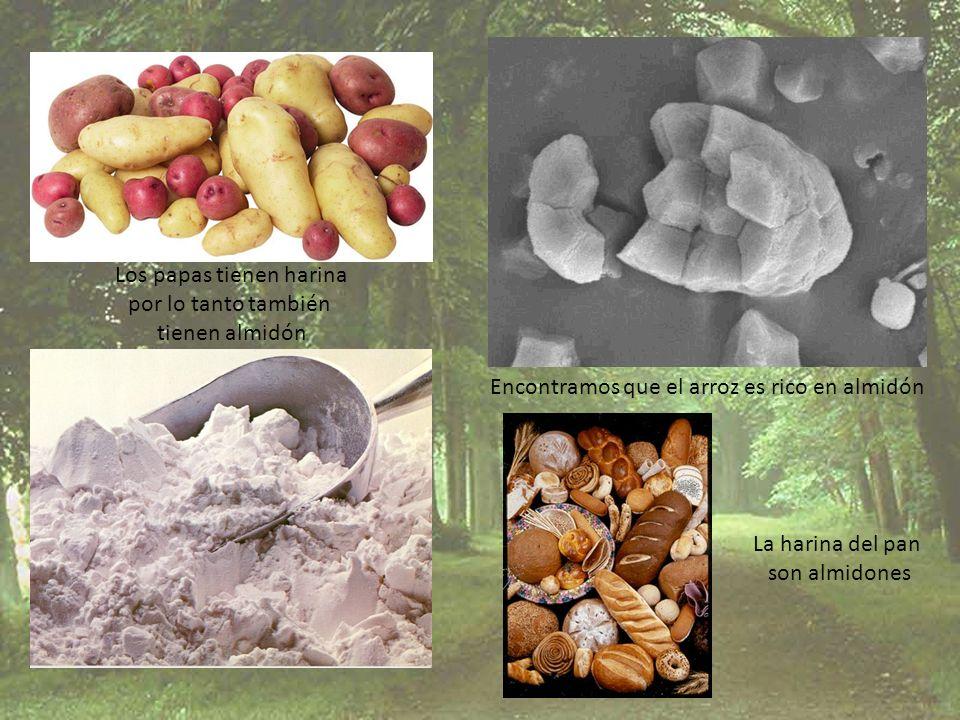 Encontramos que el arroz es rico en almidón La harina del pan son almidones Los papas tienen harina por lo tanto también tienen almidón