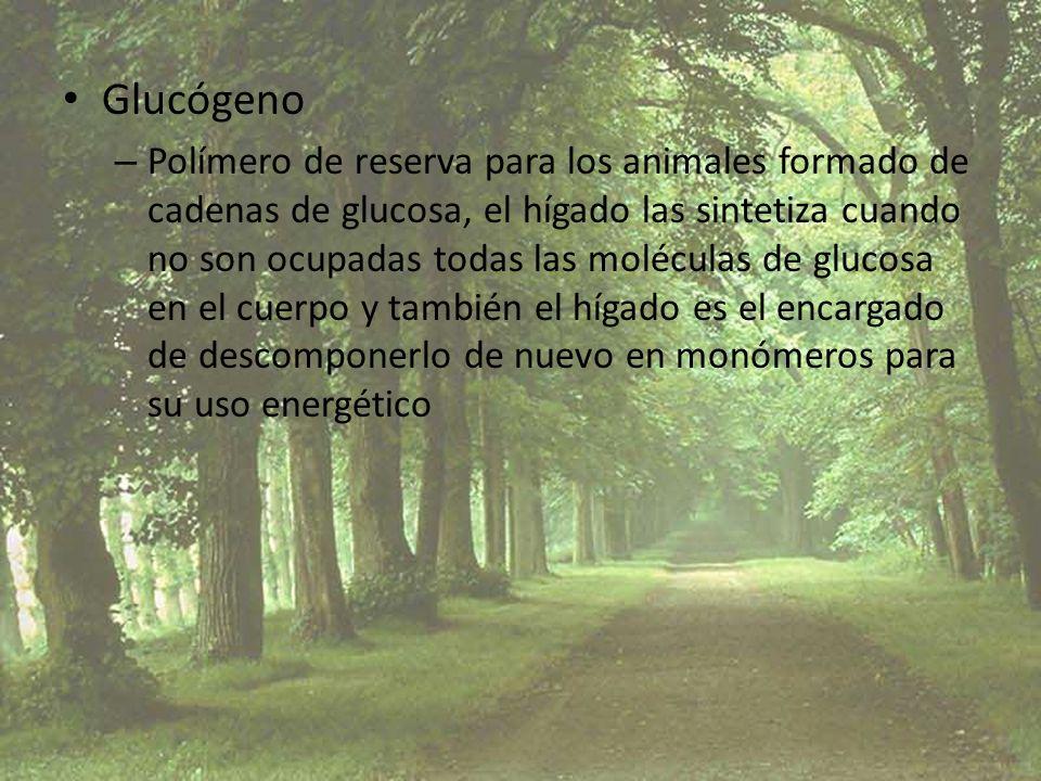 Glucógeno – Polímero de reserva para los animales formado de cadenas de glucosa, el hígado las sintetiza cuando no son ocupadas todas las moléculas de