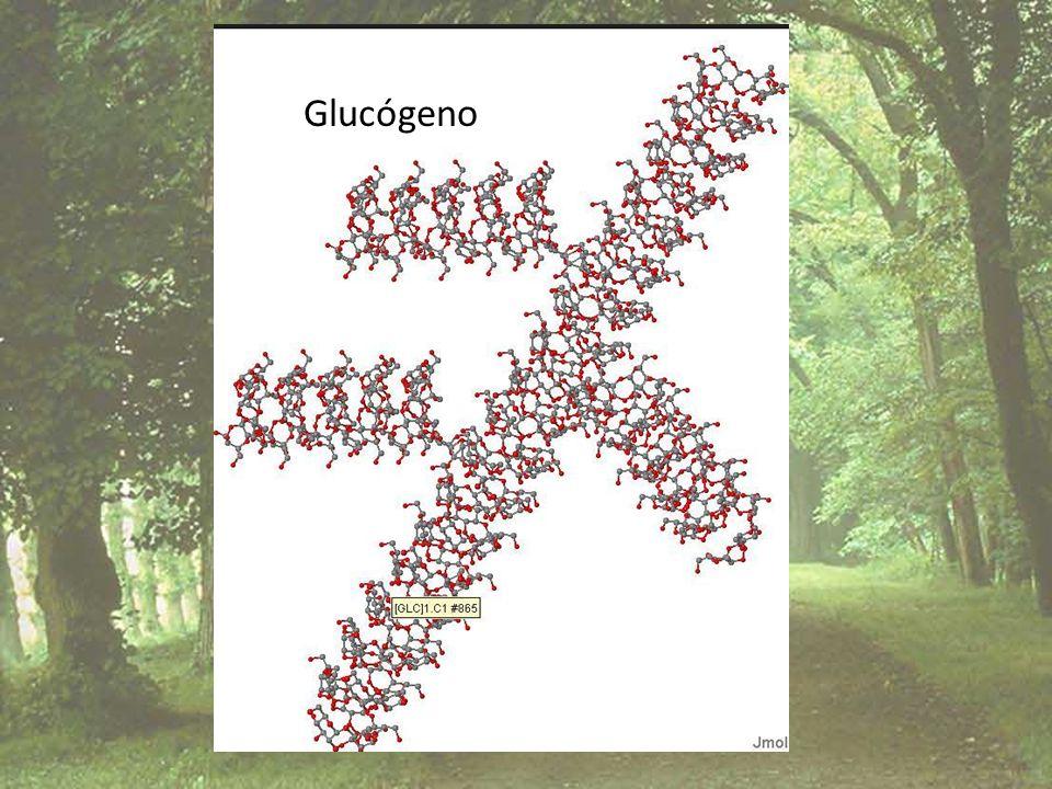 Glucógeno