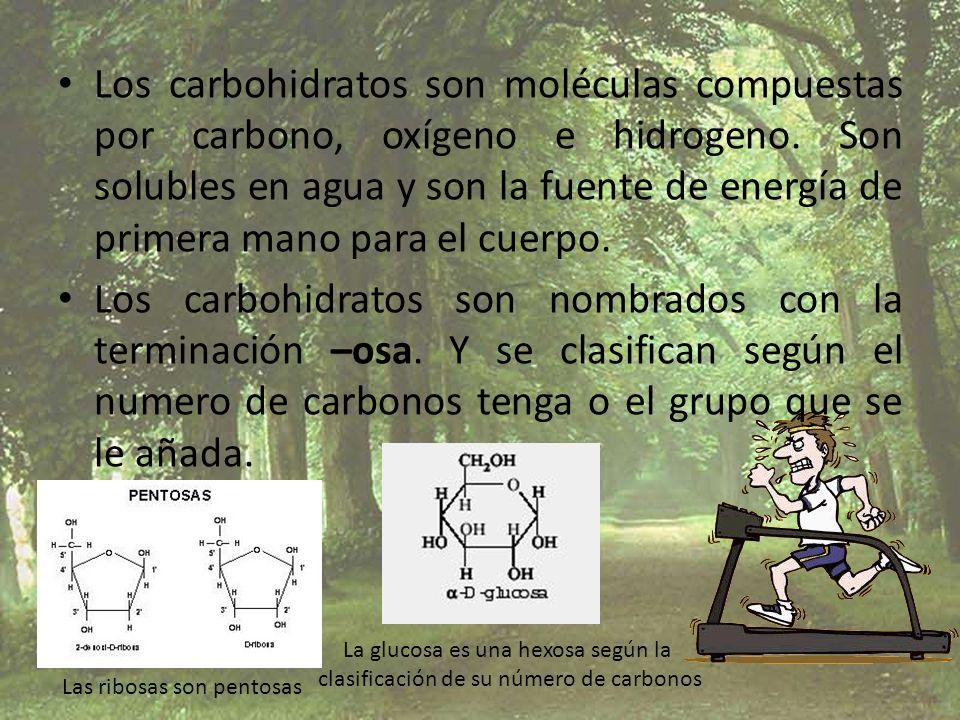 Los carbohidratos son moléculas compuestas por carbono, oxígeno e hidrogeno. Son solubles en agua y son la fuente de energía de primera mano para el c