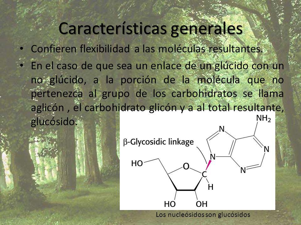 Características generales Confieren flexibilidad a las moléculas resultantes. En el caso de que sea un enlace de un glúcido con un no glúcido, a la po