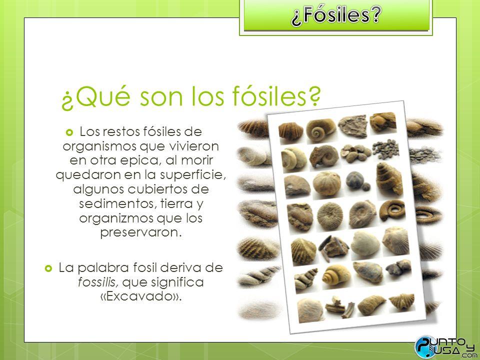 ¿Qué son los fósiles? Los restos fósiles de organismos que vivieron en otra epica, al morir quedaron en la superficie, algunos cubiertos de sedimentos