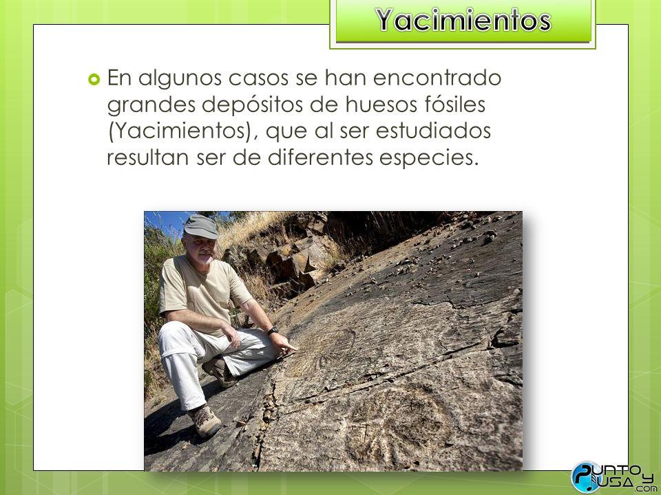 En algunos casos se han encontrado grandes depósitos de huesos fósiles (Yacimientos), que al ser estudiados resultan ser de diferentes especies.