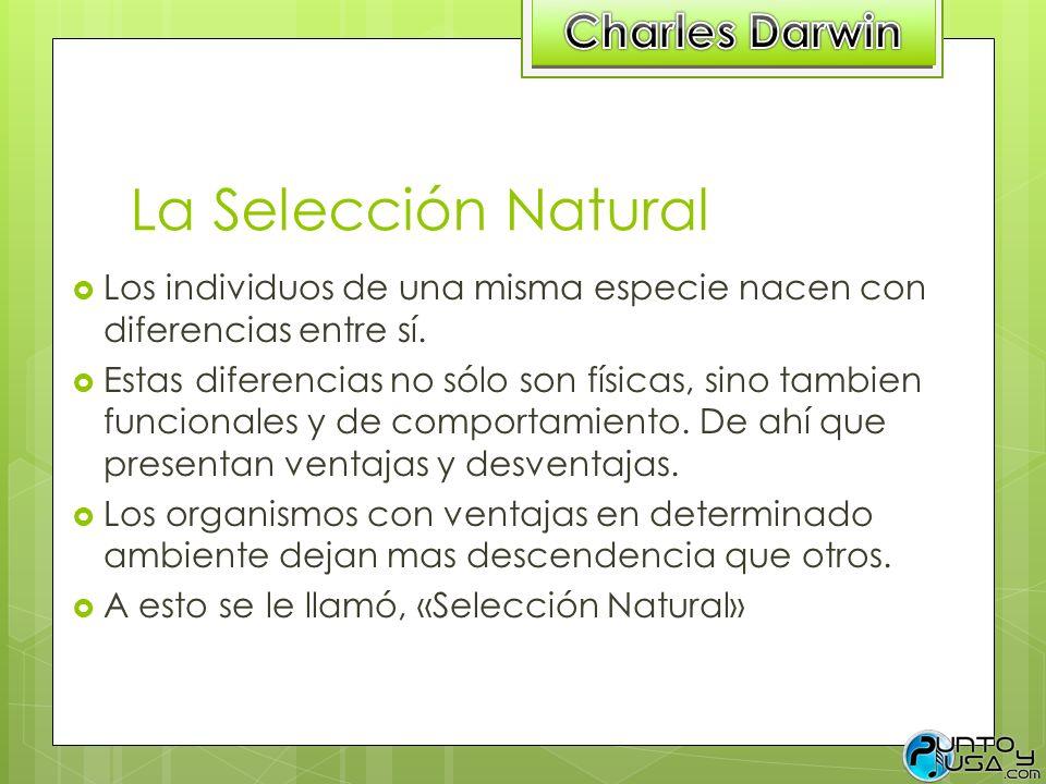 La Selección Natural Los individuos de una misma especie nacen con diferencias entre sí. Estas diferencias no sólo son físicas, sino tambien funcional