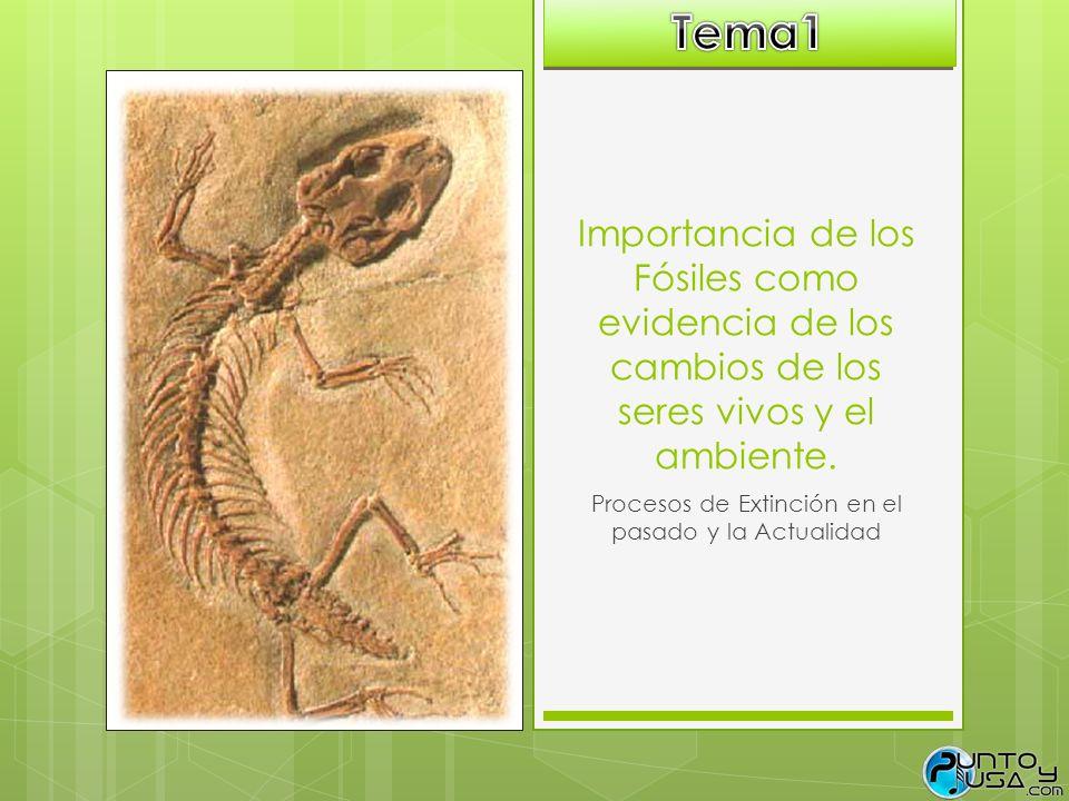 Importancia de los Fósiles como evidencia de los cambios de los seres vivos y el ambiente. Procesos de Extinción en el pasado y la Actualidad