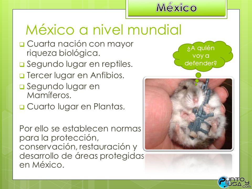 México a nivel mundial Cuarta nación con mayor riqueza biológica. Segundo lugar en reptiles. Tercer lugar en Anfibios. Segundo lugar en Mamíferos. Cua