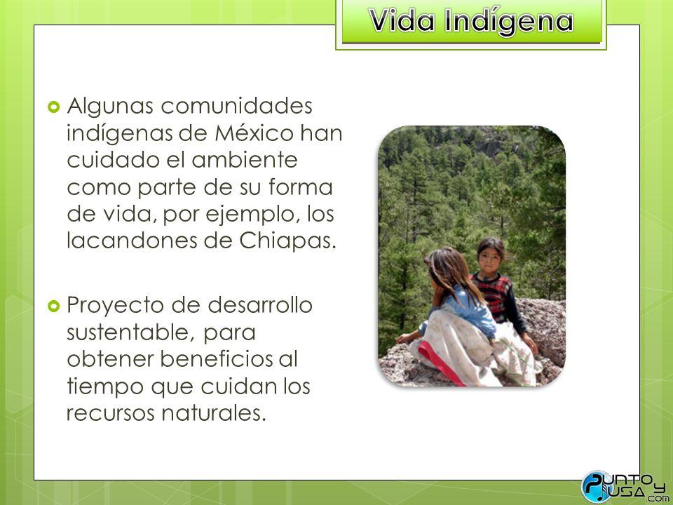 Algunas comunidades indígenas de México han cuidado el ambiente como parte de su forma de vida, por ejemplo, los lacandones de Chiapas. Proyecto de de