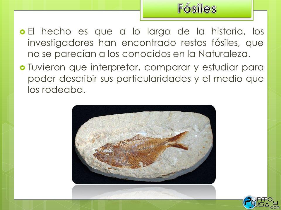 El hecho es que a lo largo de la historia, los investigadores han encontrado restos fósiles, que no se parecían a los conocidos en la Naturaleza. Tuvi