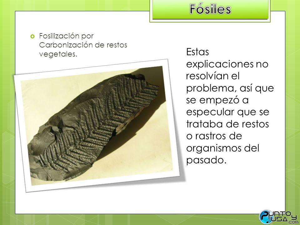 Fosilización por Carbonización de restos vegetales. Estas explicaciones no resolvían el problema, así que se empezó a especular que se trataba de rest