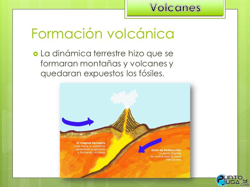 Formación volcánica La dinámica terrestre hizo que se formaran montañas y volcanes y quedaran expuestos los fósiles.
