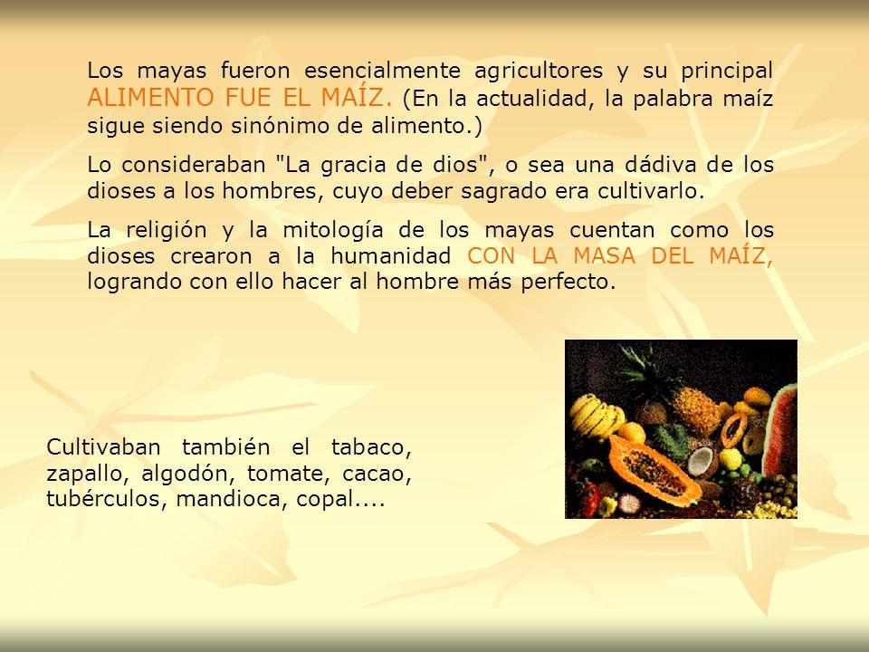 Los mayas fueron esencialmente agricultores y su principal ALIMENTO FUE EL MAÍZ. (En la actualidad, la palabra maíz sigue siendo sinónimo de alimento.
