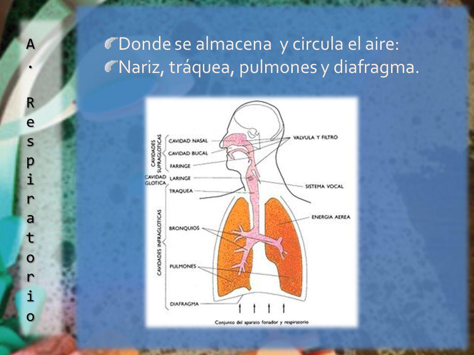 Donde se almacena y circula el aire: Nariz, tráquea, pulmones y diafragma.