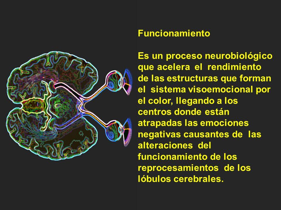 El cerebro archiva por colores. El cerebro utiliza los colores para almacenar y ordenar datos sobre objetos.