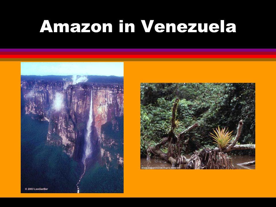 Amazon in Venezuela