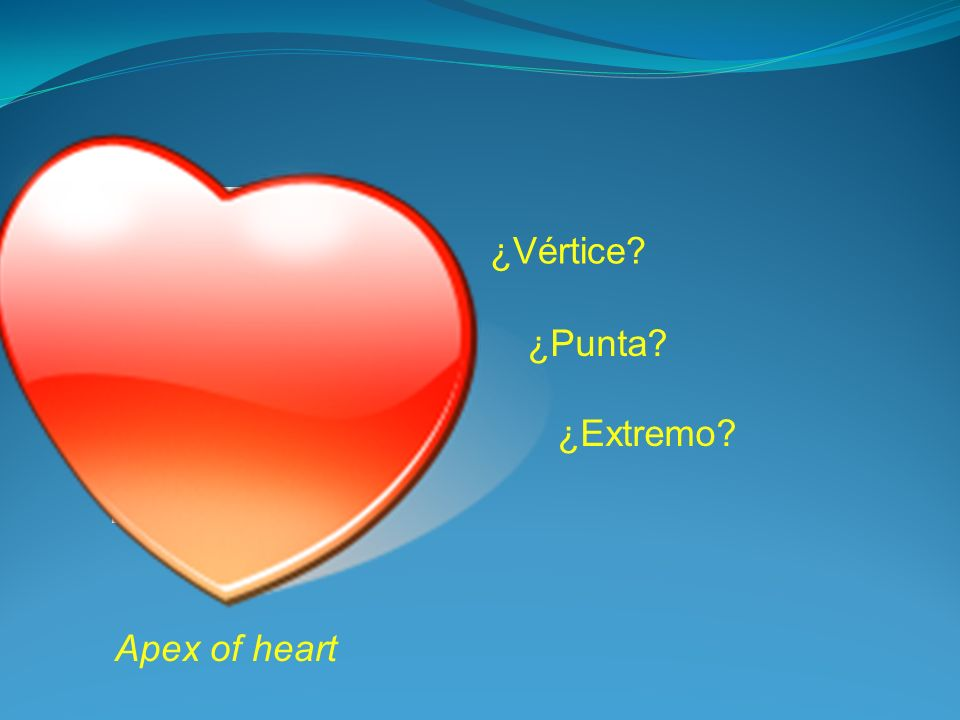 Apex of heart ¿Vértice? ¿Punta? ¿Extremo?