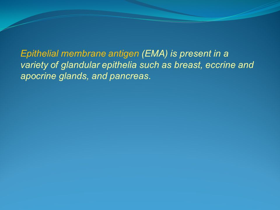 Epithelial membrane antigen (EMA) is present in a variety of glandular epithelia such as breast, eccrine and apocrine glands, and pancreas.
