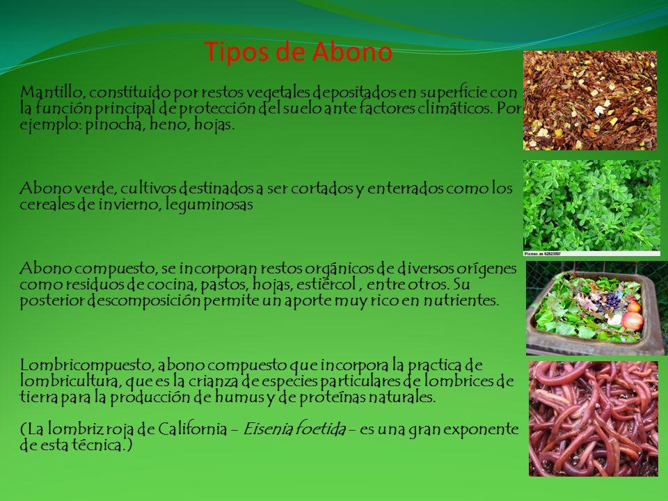 Tipos de Abono Mantillo, constituido por restos vegetales depositados en superficie con la función principal de protección del suelo ante factores cli