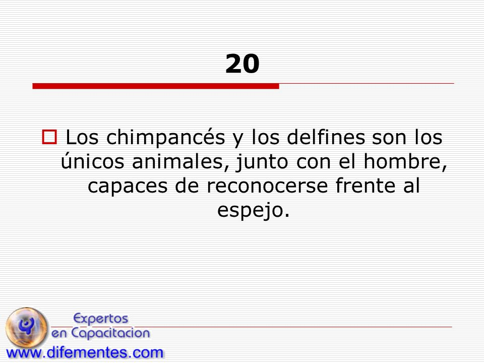 20 Los chimpancés y los delfines son los únicos animales, junto con el hombre, capaces de reconocerse frente al espejo.