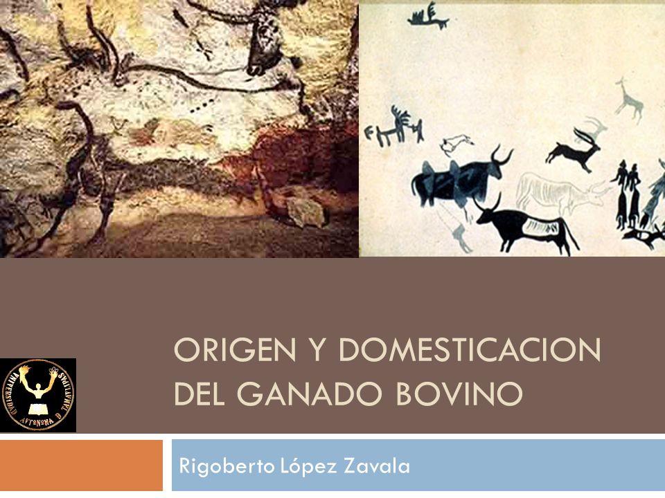 Rigoberto López Zavala ORIGEN Y DOMESTICACION DEL GANADO BOVINO