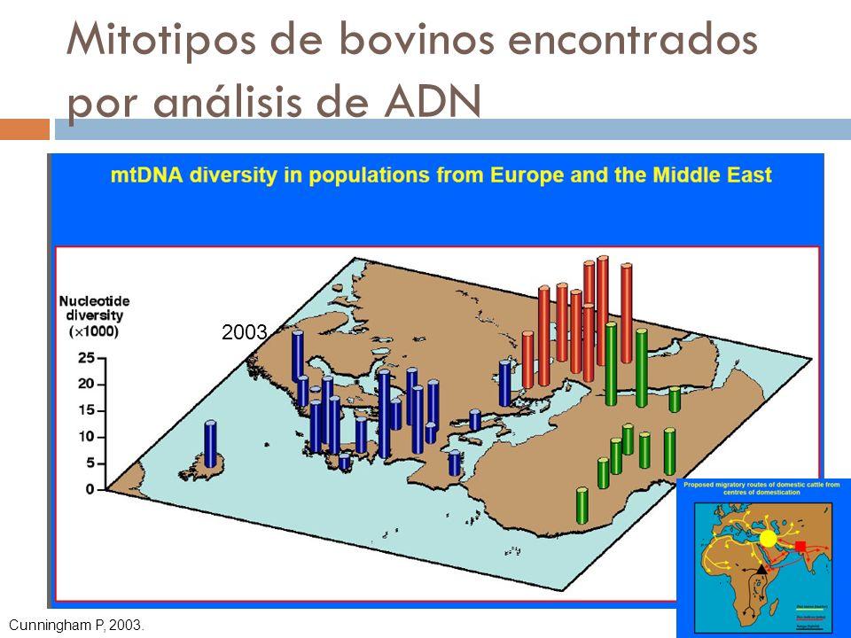 Mitotipos de bovinos encontrados por análisis de ADN Cunningham P, 2003. 2003