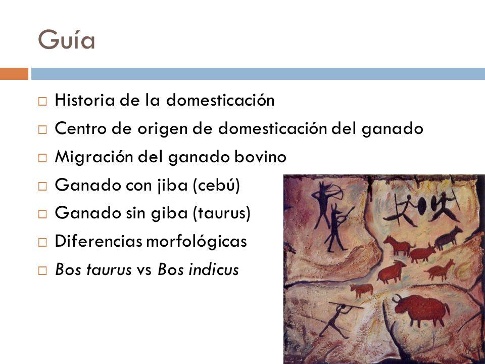 Guía Historia de la domesticación Centro de origen de domesticación del ganado Migración del ganado bovino Ganado con jiba (cebú) Ganado sin giba (tau