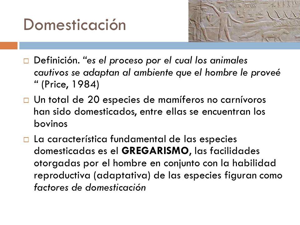 Importancia de la domesticación El ganado ha jugado un rol pivote (fundamental) en la civilización y la cultura del hombre Rol de trabajo (agricultura, carga y transporte) Rol de adoración religiosa Rol de aporte nutritivo (carne, piel y grasa)