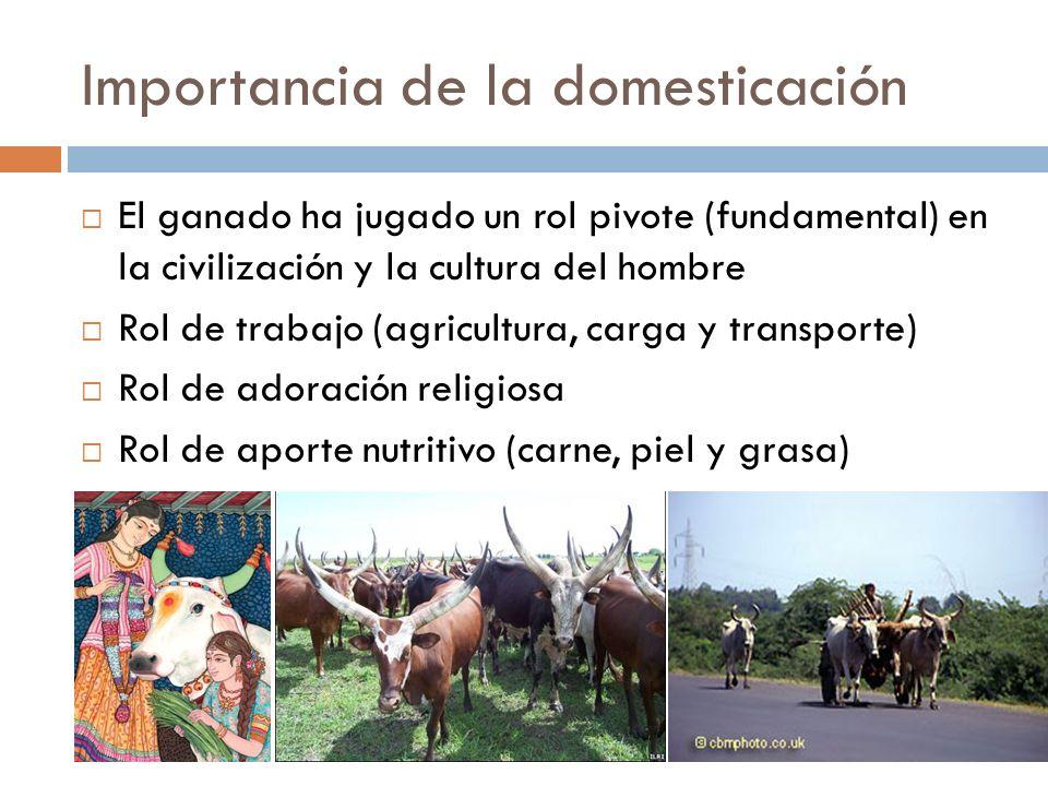 Importancia de la domesticación El ganado ha jugado un rol pivote (fundamental) en la civilización y la cultura del hombre Rol de trabajo (agricultura